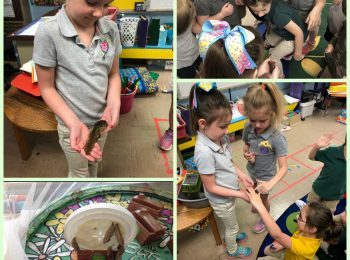 students learn about metamorphosis